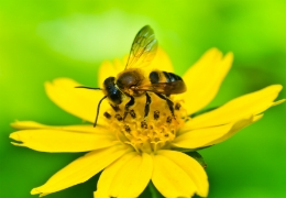 Μελισσοκομία για Αρχάριους